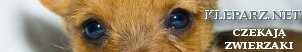 samochody osobowe, osobówki, terneówki, Koty, koteczki, adopcje kotów, karam dla kotów, dla kotów, Kuchnia, przepisy, gastronomia ,loklae, warszawa, KRaków , T^(3)umacz niemieckiego , szko^(3)a jezyków obcych Kraków e-learing, t^(3)umaczenia niemiecki Kazania i homilie