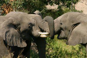712759_elefants_3